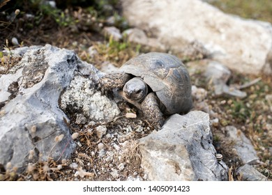 Mugla, Dalyan A turtle who loves dry places