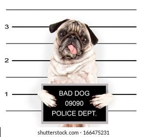 a mugshot of a bad dog