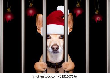 mugshot of a christmas santa bad dog behind bars in jail or prison