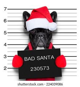 mugshot of a christmas santa bad dog
