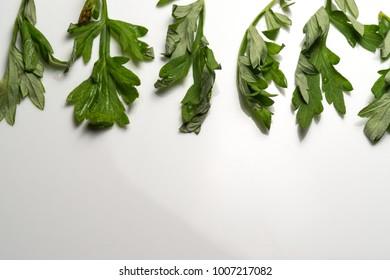 Mugwort leaves on white isolated background