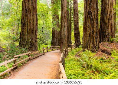 Muir Woods, National Park, California, EUA
