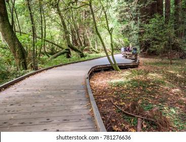 Muir Woods Redwoods Forest - Starburst, San Francisco, SF, California, CA, USA