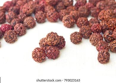 Mukhi Rudraksha Beads on white cotton
