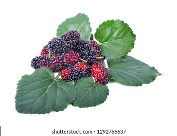 mulberries fruit and mulberry leaf on white background healthy mulberry fruit food isolated .