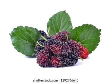 mulberries fruit and mulberry leaf on white background healthy mulberry fruit food isolated.