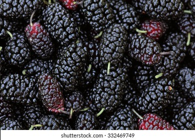 Mulberry  background / fresh mulberries