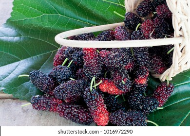 Mulberry in a basket