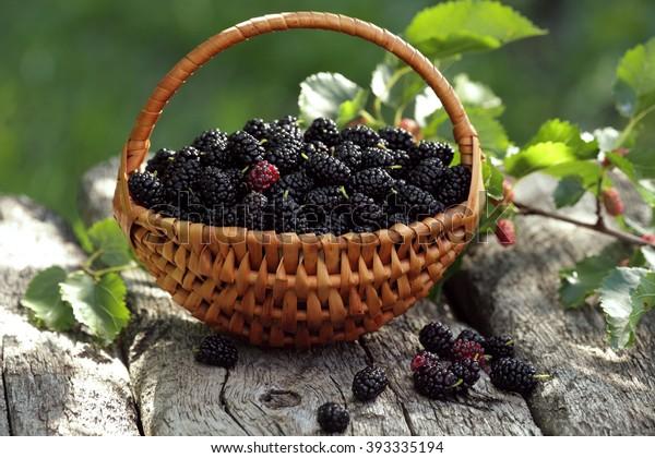 meilleure sélection 9b7ee d74d5 Mulberry Basket Blackberry Basket Stock Photo (Edit Now ...