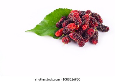 mulberry berry with leaf on white background healthy mulberry fruit food isolated