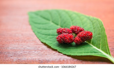 Mulberry - Fresh mulberry ripe are red and dark red with a leaf on wooden table background. Mulberry is a fruit can be eaten. Top view, Close-up, Selective focus.