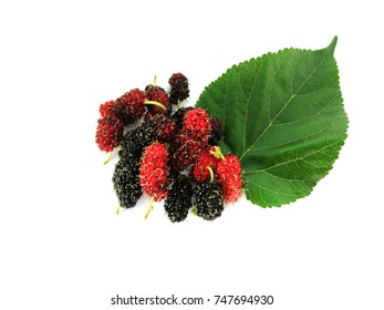 Mulberry fruits and green leaf isolated on white background and copy space