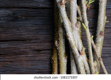 Mulberry is a medium shrub, The bark of reddish-brown, stalk, branch, not much, the preparation of mulberry branches for planting.