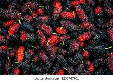Mulberrys fruit. Closeup of the freshness mulberry fruit.