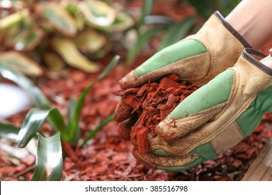 Mulching the garden with red cedar wood chip