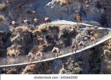 A mule caravan crossing suspension bridge over Thuli Bheri Nadi river, Tripurakot, Dolpa District, Nepal.