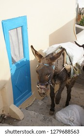 Mule carrying building supplies through the steep narrow streets of Oia, Santorini, Greece