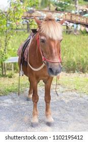 mule donkey horse standing alone