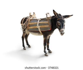 Mule / Donkey (isolated on white with shadow)