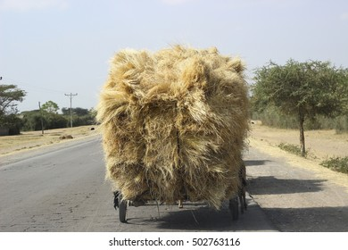 A mule transporting hay stacks in Southern Ethiopia
