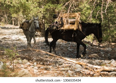 Mules carrying a huge load on a mountain path through pine forest at Samaria gorge, south west part of Crete island, Greece