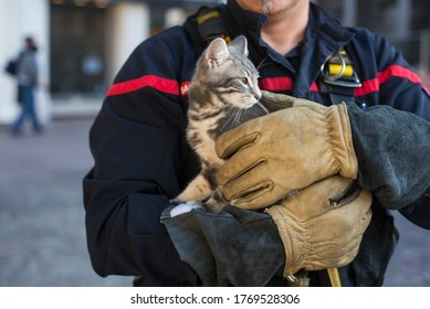 Mulhouse - France - 4 July 2020 - Closeup of firefighter with a young cat in arms  in the street afetr intervention