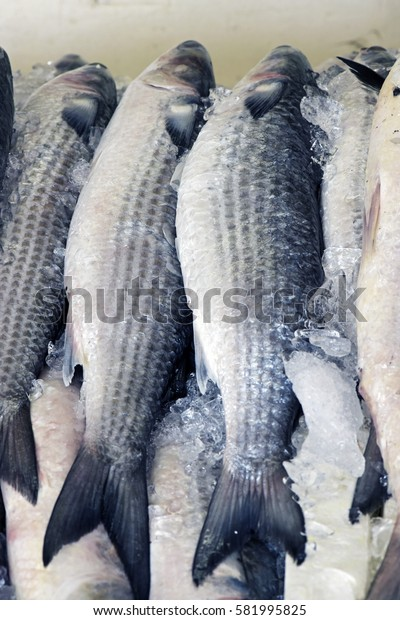 Mullet or grey mullet exposed in fish market for sale to the consumer