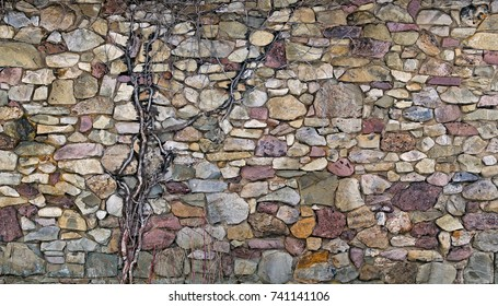 Multi color stacked stone and rock wall with old vine growing in it.