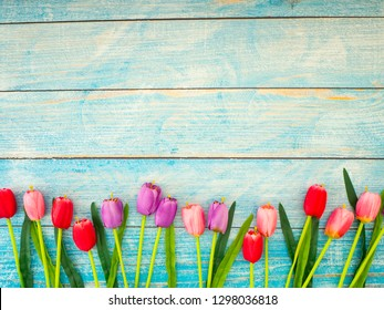 Multi color Tulips on blue wood background.Image of spring flower. Empty space for design
