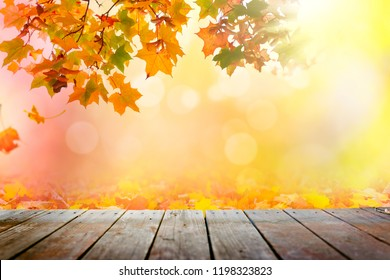 Multi colored autumn tree leaves sunset background