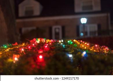 Christmas Bush Lights.Christmas Lights On A Bush Images Stock Photos Vectors