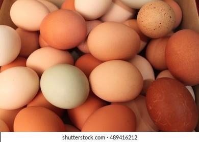 multi colored farm fresh eggs