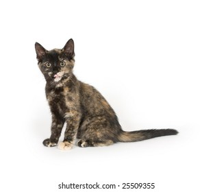 A multi colored kitten sitting on a white background