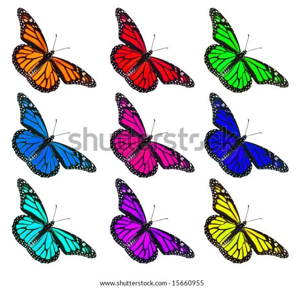 Multi colored Monarch Butterflies