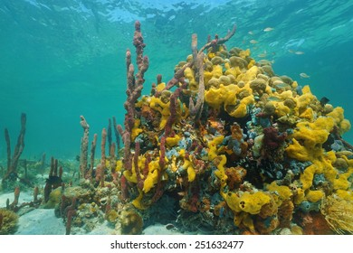 Multi colored sea sponges underwater in a coral reef of the Caribbean sea