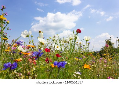 multi colorful flowers in meadow at sunshine summer day in south germany countryside near schwaebisch gmuend city