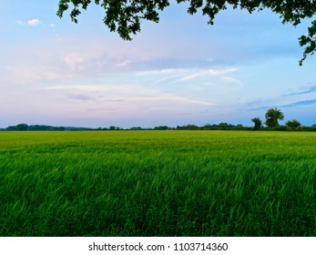 The multi coloured evening sky darkens over a field of young, green, wheat plants.
