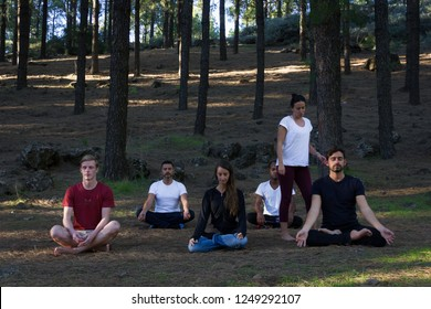 Multi ethnic group on yoga meditation class following teacher instructions in pine trees forest park. Young woman guiding students on mindfulness exercise. Self connection in nature concept