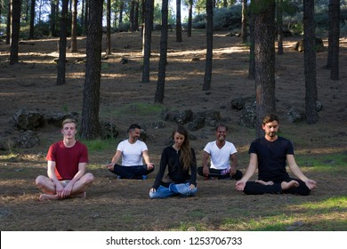 Multi ethnic group of young people sitting in padmasana in meditation class in pine wood forest. Woman and four men in lotus pose outdoors. Spiritual exercise, nature connection concepts