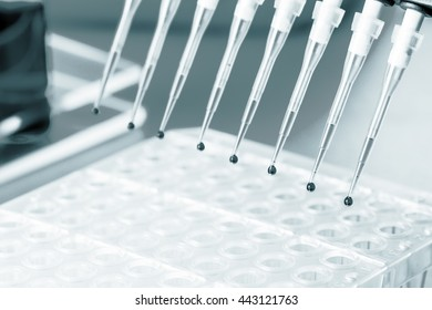 Multichannel Pipette  with biological samples. Science concept. Blue colored image