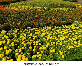 Multicolor background flower beds with lining whirling into top center.