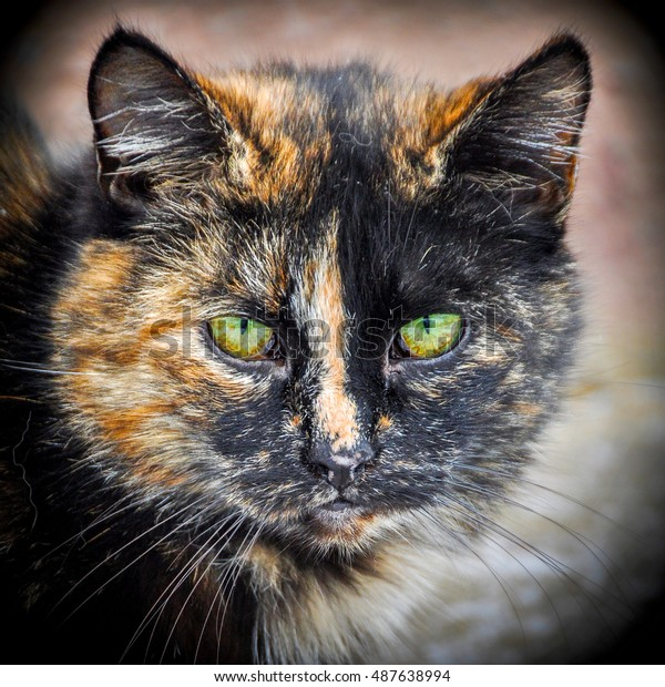 Multicolor Cat Green Eyes Stock Photo Edit Now 487638994