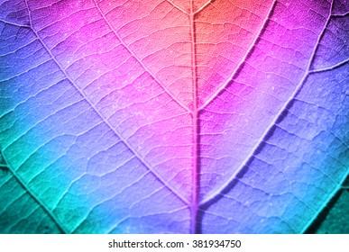 Multicolor fresh leaf, close up