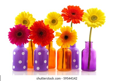 Multicolor Gerber in colorful glass vases isolated over white