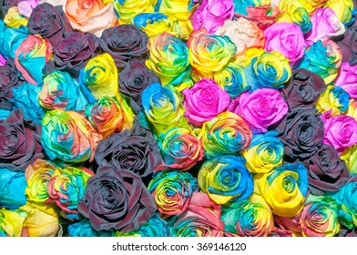 Multicolor rainbow rose flower background