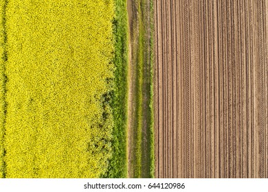 Multicolored agricultural landscape in an aerial view of a bright yellow rape field side by side with freshly ploughed brown earth divided by a strip of greenery