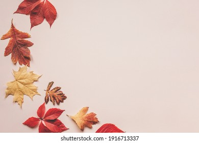 Multicolored autumn leaves on a pink background. There is a copy space nearby.