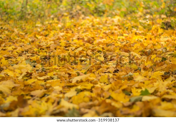 Multicolored autumn leaves in the park on the ground