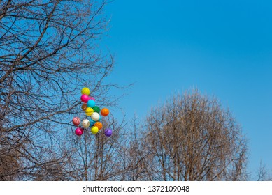 Multicolored balloons hanging on the bare branches of the trees against the blue sky, copy space, spring pettern