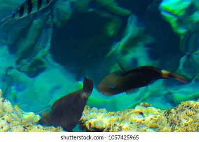 Multicolored beautiful red sea fish over the thickness of the water on a blurred background of coral reefs and yellow sand. Sharm el-Sheikh, Egypt, screensaver, wallpaper